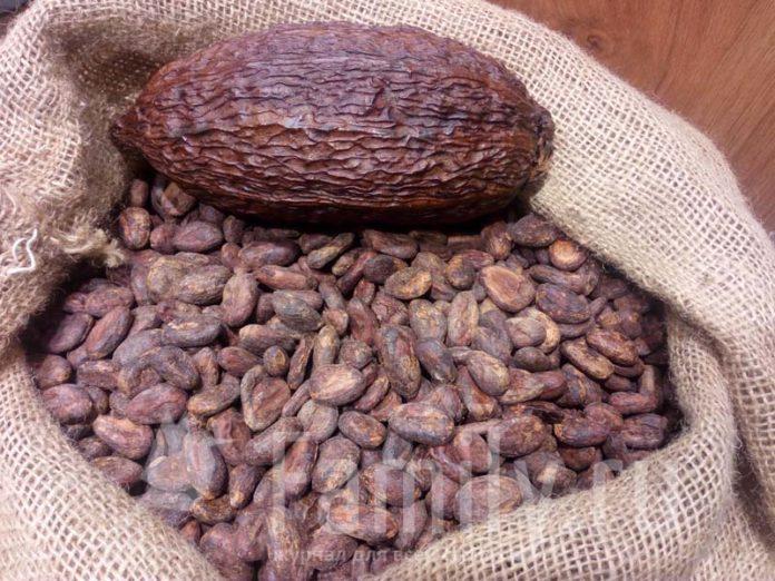 Какао-бобы из Африки