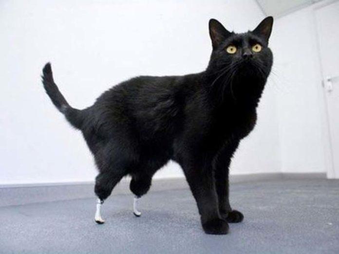 Кот на протезах