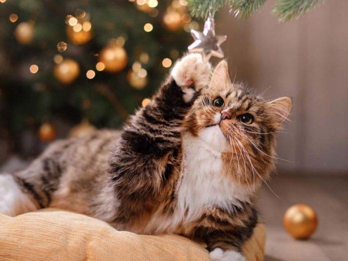 Котик под елкой в новый год