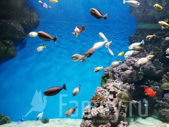 Аквариум с рыбками и кораллами