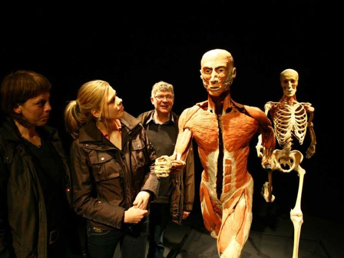 Органы человека на выставке