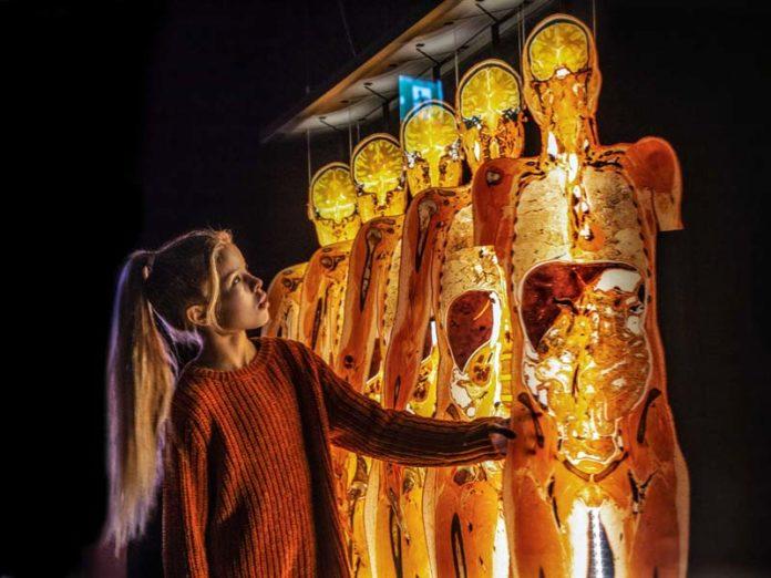 Выставка «Body Worlds: цикл жизни»