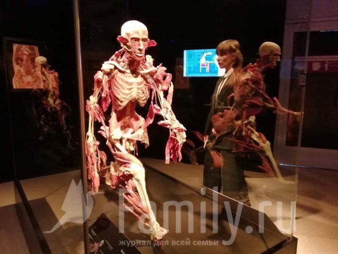 Экспонат выставки Body Worlds в Москве