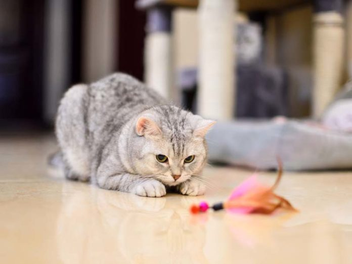 Котик с игрушкой