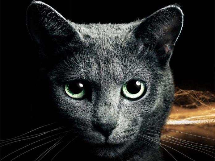 Кошка из рекламы Sheba