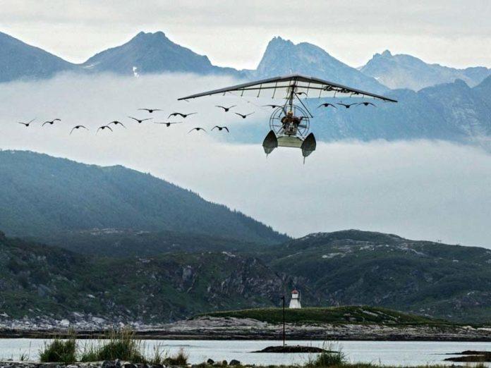Дикие гуси и самолет